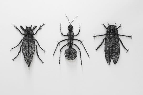 Insectos de vernao, plagas
