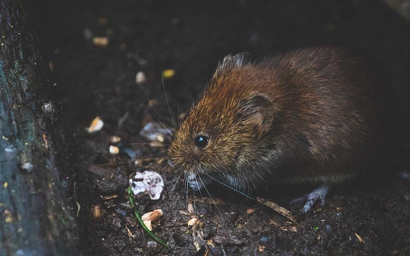 ¿Hay plagas de cucarachas, roedores e insectos en invierno?