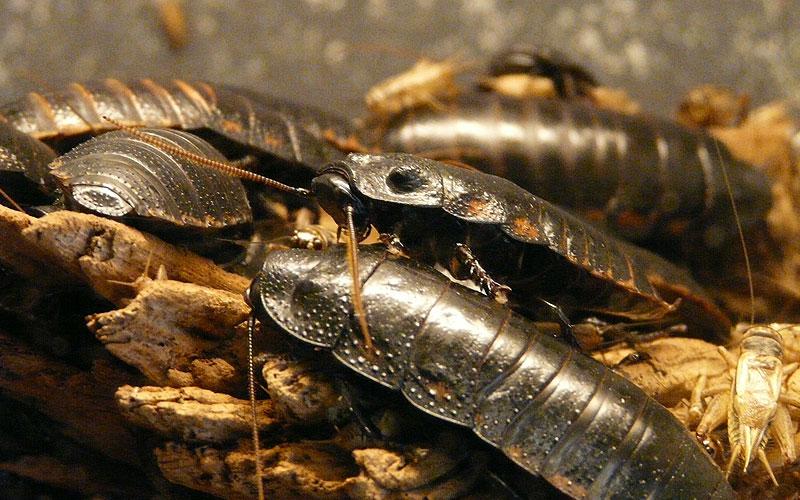 Cómo matar cucarachas - SH Servicio e Higiene Control de Plagas